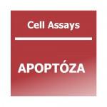 CA Apoptoza